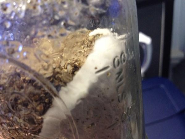 Magic Mushroom Incubation - Year of Clean Water