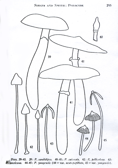 The Greatest Shroom Library Part IV: Magic Field Guides