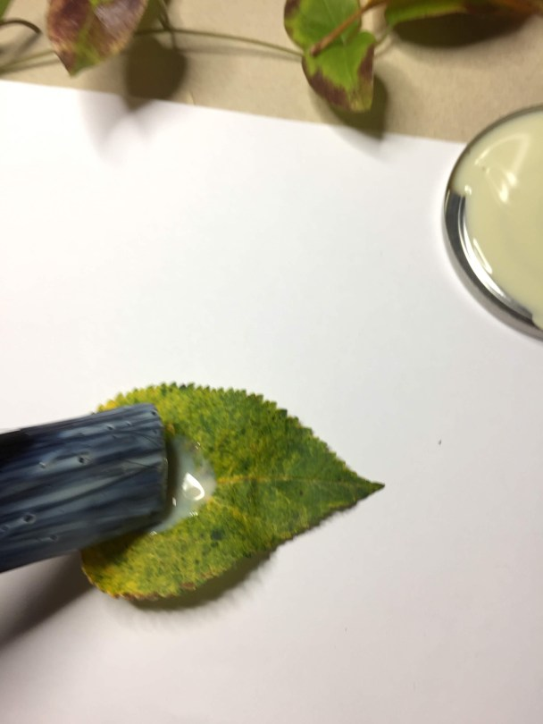 how to apply varnish on leaves