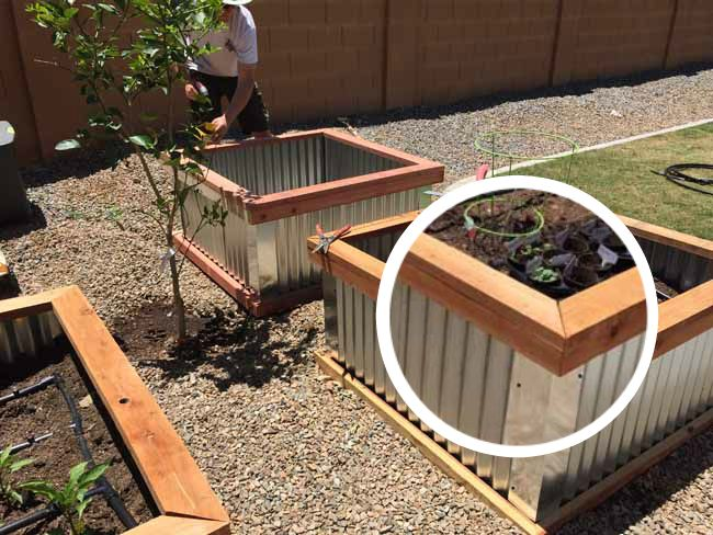 Corrugated Metal Raised Bed Garden Boxes Planbois