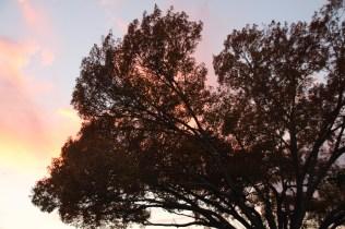 Sunset Nov 25 (9)