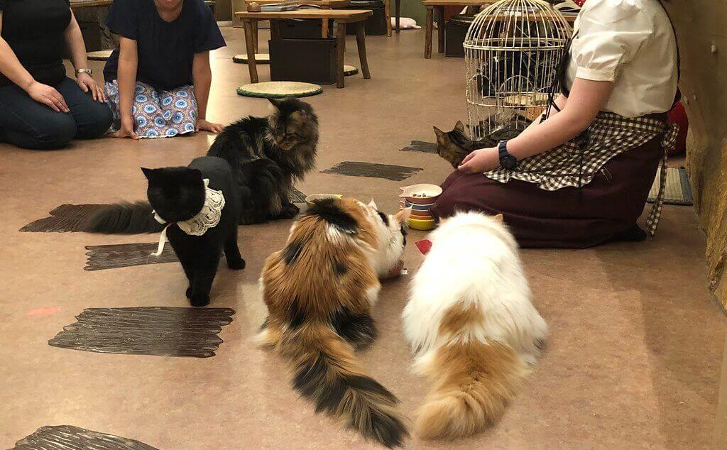 mycrazyjapan - Le scandale des animal cafés
