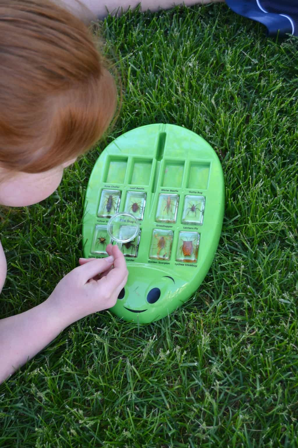 8 Bug Activities For Kids  My Creative Days