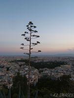 treelycavetos.jpg