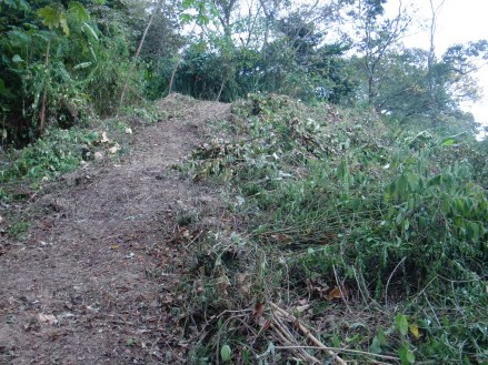 The owner paid to have a path cleared so we could walk up to the build site.