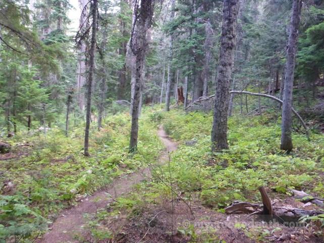 The neverending forest