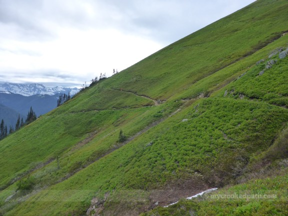 Looking back at the junction of the N. Fork Sauk trail and the PCT