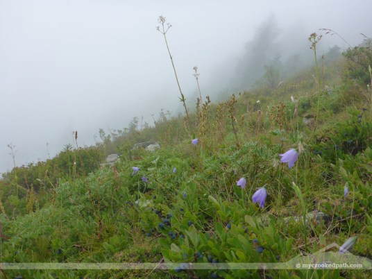 The hills are alive... and foggy... and wet