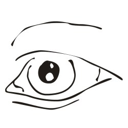 body clipart parts clip eye human eyes cliparts flashcards library nose tweety bird funny 20clip 20parts 20art license plate proprofs