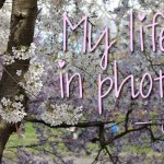 My life in photo's – juni