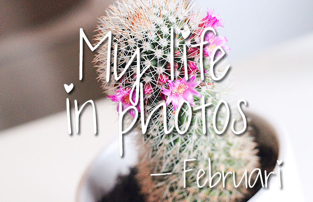 mylifeinphotos-feb17