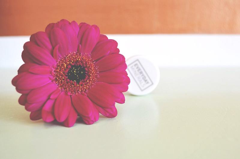 germini flower