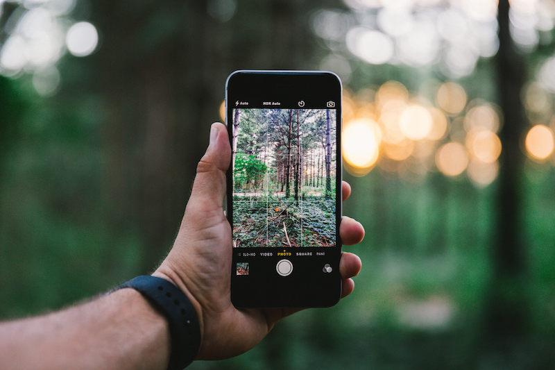 woud-bos-bomen-foto-bokeh