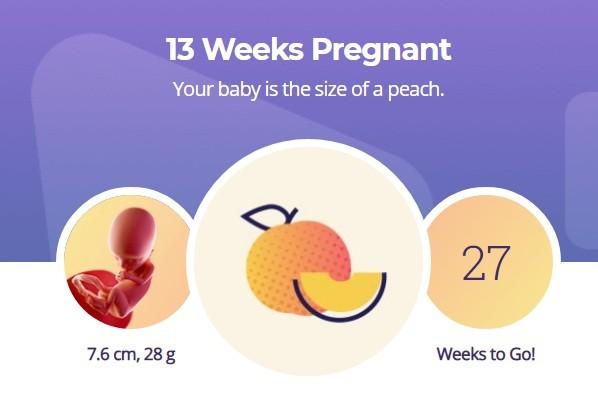13 week pregnancy