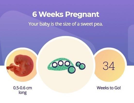 6 week of pregnancy