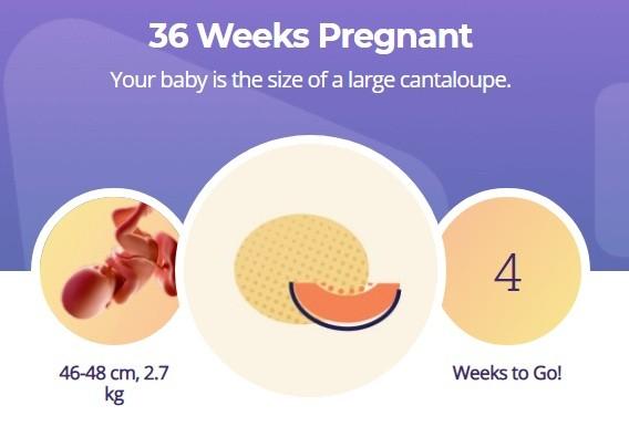 36 week pregnancy