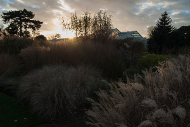 Silhouetted trees and grass at Kew