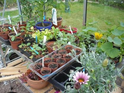 Various things growing