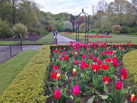 Tulips in the formal garden