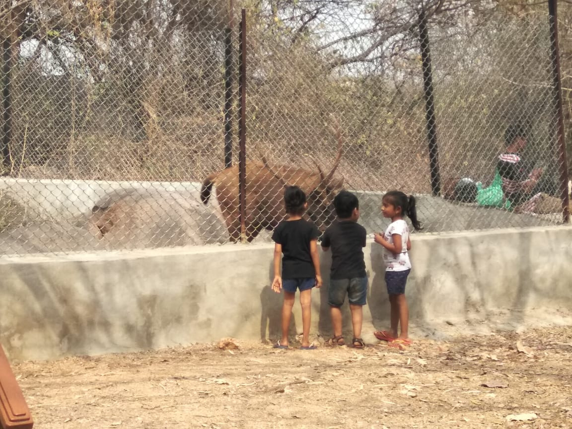 Mrugavani National Park: Feed A Sambar Deer For The Whole Day