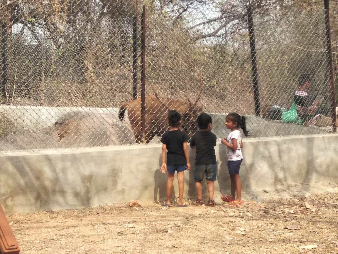 Mrugavani National Park: Feed A Sambar Deer For The Whole Day