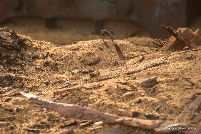 myddelton-contact-sawdust