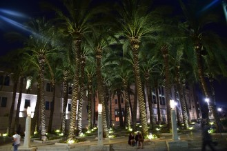 palm trees in the city