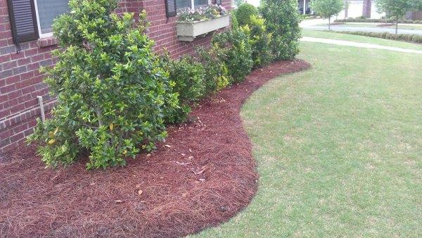 top benefits of mulch