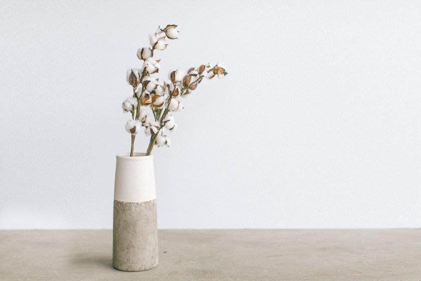 Vase of Cotton