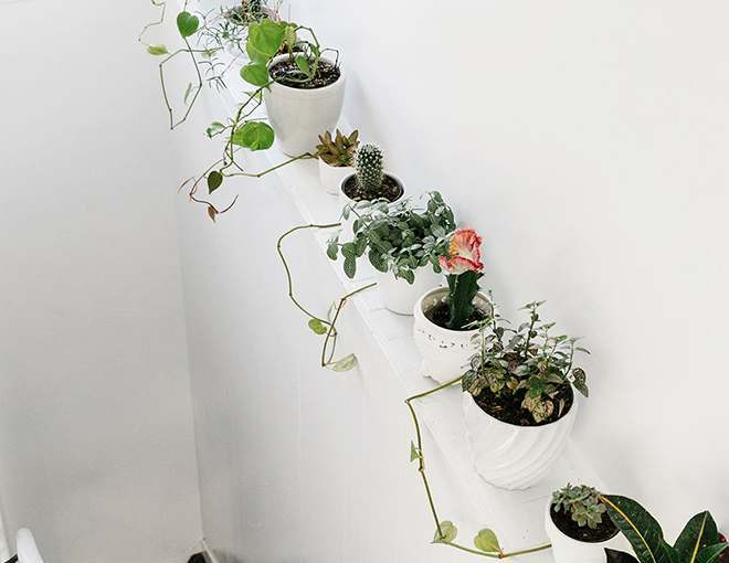 Idea to Decorate With Plants
