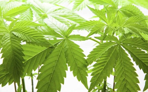 Marijuana Abuse Drug Free Defense Zine