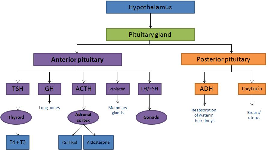 Hypoaldosteronism; Hypoaldosteronism. Hyporeninemic; Acidosis. Renal Tubular Type IV; Renal Tubular Acidosis. Type IV; Type IV Renal Tubular Acidosis