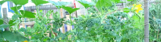 cropped-second-round-of-peas-and-squash-sharing-trellising-7-41.jpg
