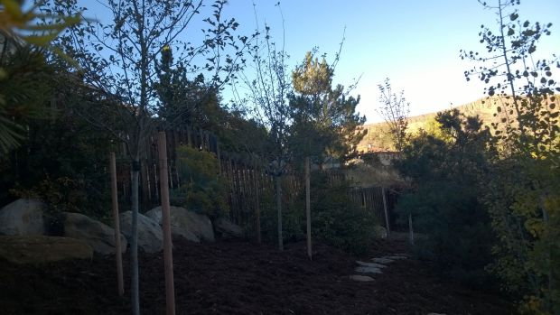 Broderick trees
