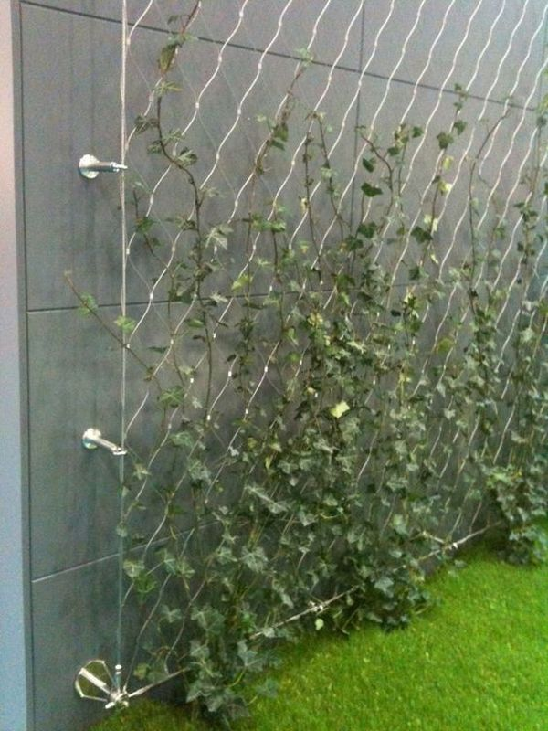 Climbing plants ideas10