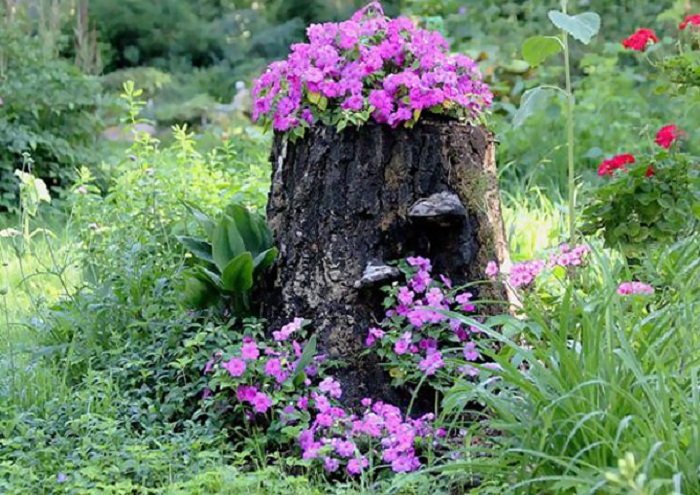 Old stumps flower gardens9