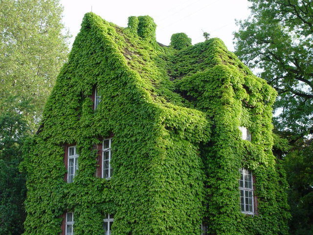 Houses drowned in greenery6
