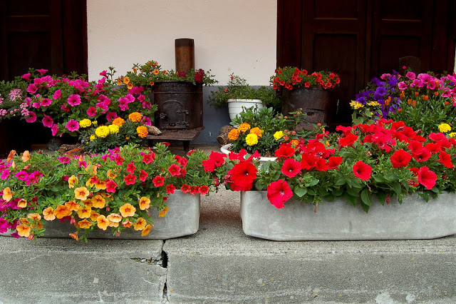 Flower balconies and windows12