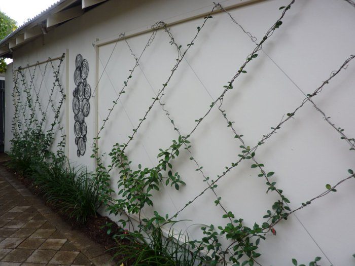 trellis in the garden16