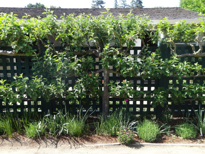 trellis in the garden18