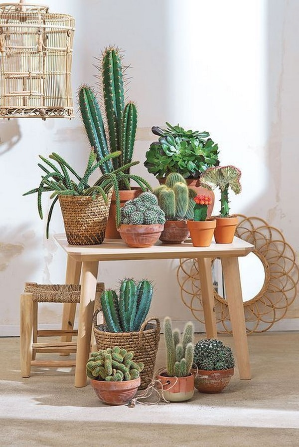 decorating interiors with cactus1