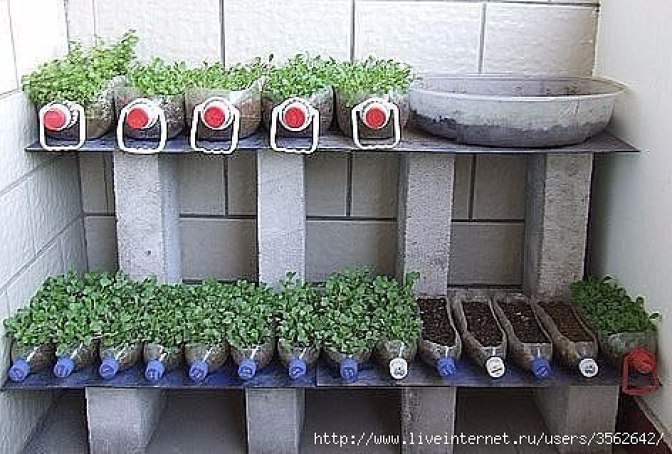 gardening tips and design ideas9