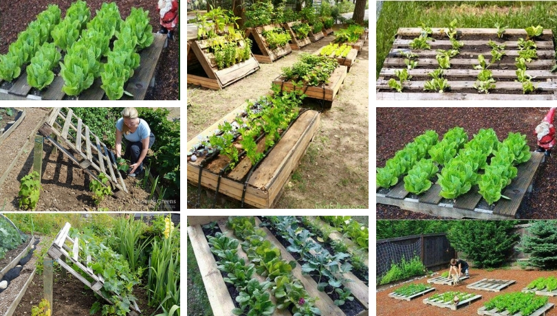 Smart Diy Gardening Ideas On Pallets My Desired Home