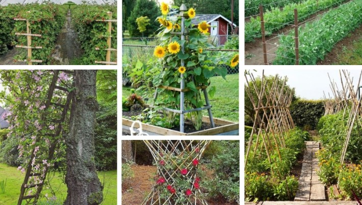 Creative Diy Ideas For Support Climbing Vegetables Plants And