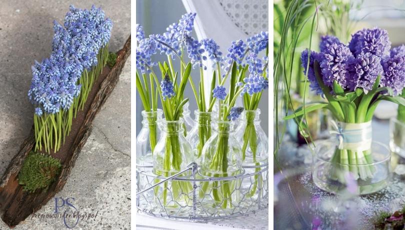 Spring blueness decoration – amazing ideas with blue grape hyacinth