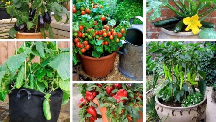 5 spring vegetables to grow in pots