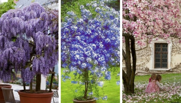 The most beautiful trees for a truly spectacular yard and garden