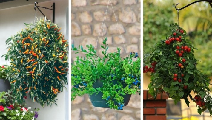 How to grow the most beautiful and delicious fruits and vegetables in hanging baskets