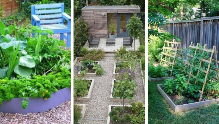 How to arrange your vegetable garden and what to plant in July-August