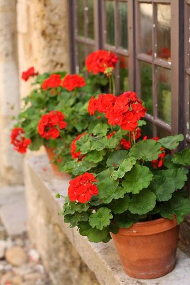 Red Flowers A Real Oasis Of Passion And Color In Your Backyard My Desired Home